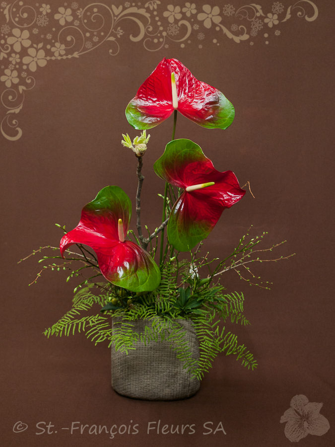 Abonnement st fran ois fleurs sa for Abonnement fleurs